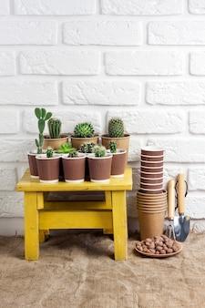 Cactus e piante grasse in bicchieri di carta sul piccolo tavolo giallo con attrezzi da giardinaggio