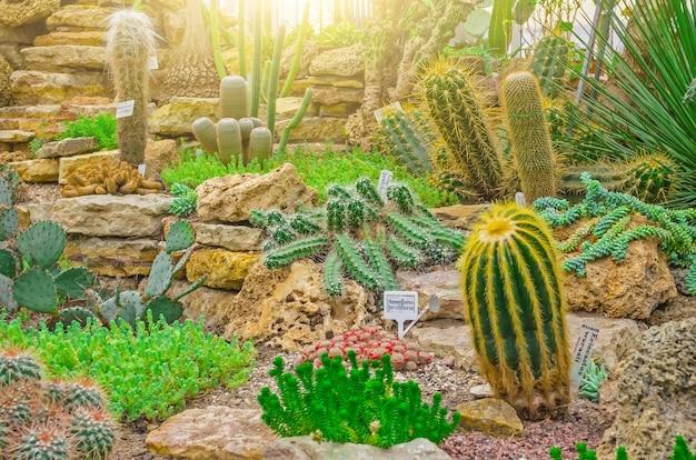 Cactus nei deserti tropicali del nord america da vicino.