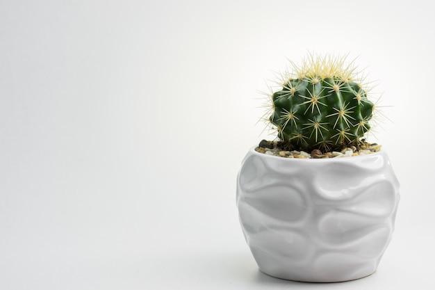 Cactus in un vaso bianco
