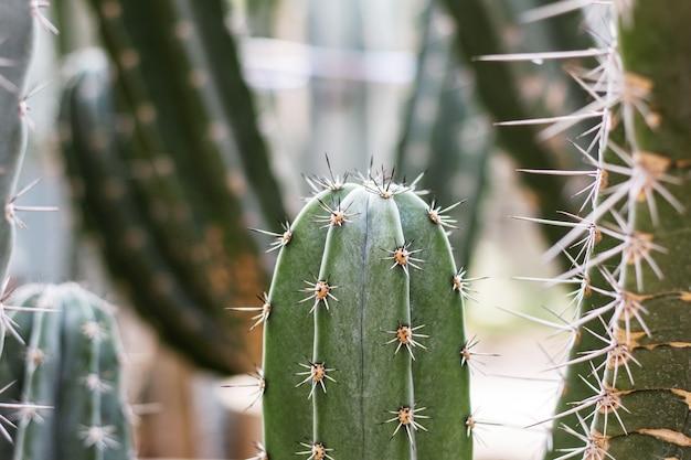 Cactus con la luce del sole in estate.