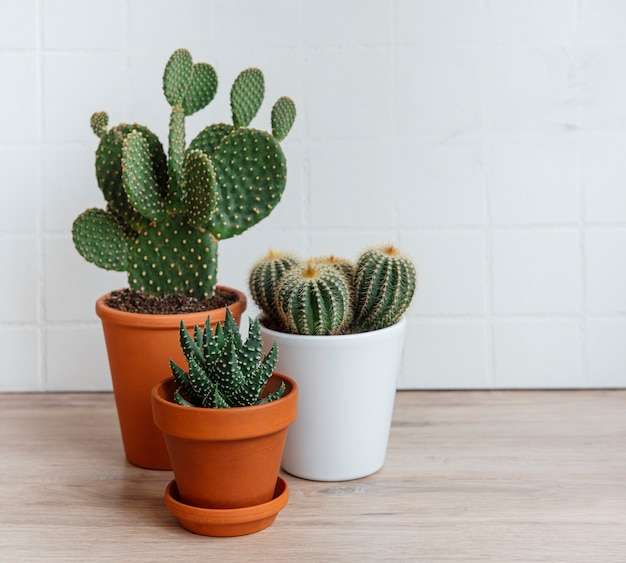 Cactus e piante grasse in vaso sul tavolo, piante da appartamento