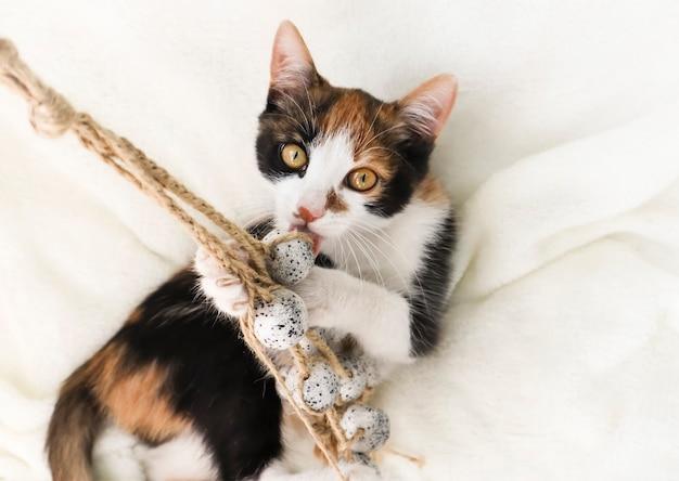 Gatta calico, gattino simbolo di buona fortuna e prosperità, il simbolo dello stato del maryland.