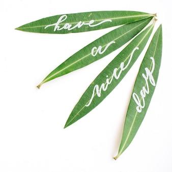 Parole calligrafiche scritte su foglie verdi