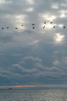 Mare calmo e cielo azzurro con cirri bianchi. il sole splende attraverso le nuvole. uno stormo di uccelli vola nel cielo. sensazione di calma, freschezza, relax.