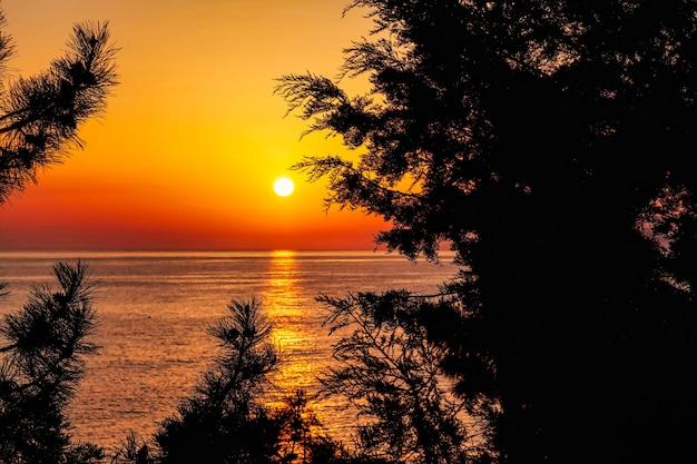 Mare calmo con alba e sole attraverso gli alberi. fondo dell'oceano e del cielo di meditazione. vista sul mare sull'acqua. sfondi per sito o sfondi ad alta risoluzione. concetto di natura, turismo e avventura
