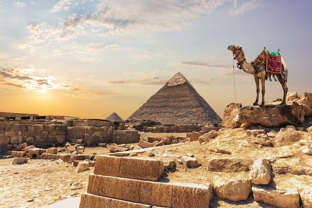 Un cammello vicino alla piramide di khafre a giza, in egitto.