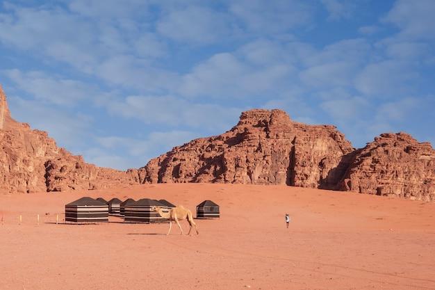 Cammello e turista in un campo tendato nel deserto del wadi rum con le montagne sullo sfondo, in una calda giornata di sole