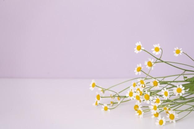 Camomilla piccolo gruppo impostato isolato su superficie bianca come elemento di design della confezione
