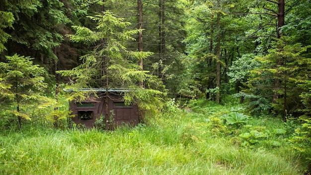 Pelle mimetica per la fotografia naturalistica all'ombra di un albero all'interno della foresta
