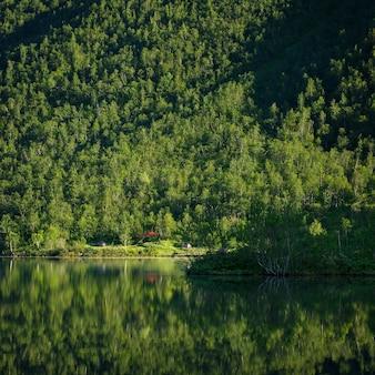 Escursionisti del campo con le tende sulla riva di un lago di montagna, nella foresta