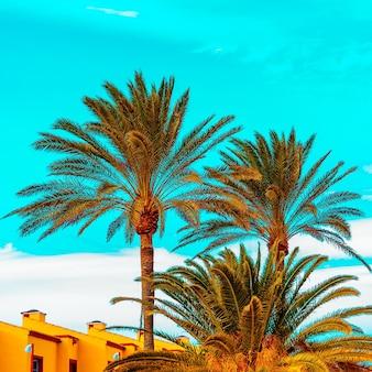 Isole canarie. palme atmosfera tropicale