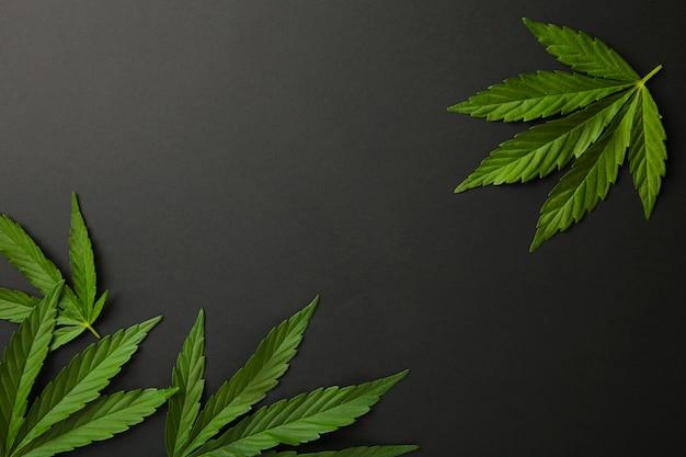 Foglie di cannabis, foglie di marijuana sul nero