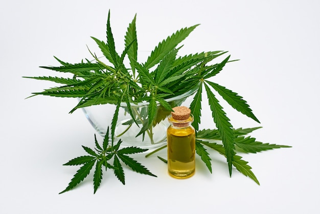 Estratto di olio di cannabis e foglie fresche di cannabis su uno spazio bianco.