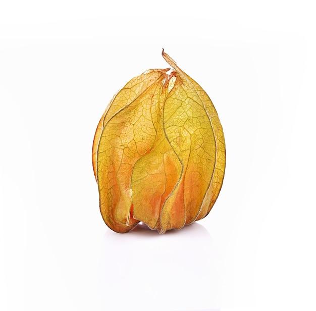 Frutti di bosco mantelli su sfondo bianco