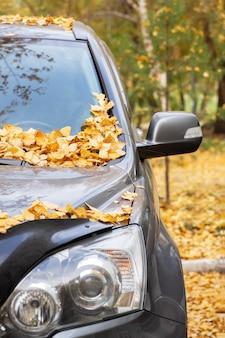 Un'automobile nel parco con le foglie di giallo di autunno