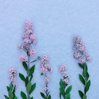 Scheda con fiori di campo rosa su sfondo blu con copia spazio