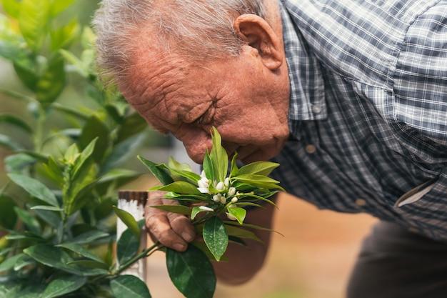 Cura e raccolta delle piante, giardinaggio dell'uomo anziano
