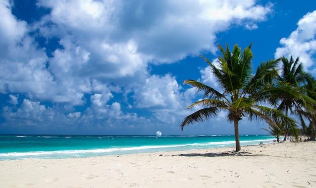 Spiaggia caraibica e palma .paradiso. concetto di vacanza e turismo.
