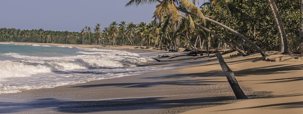 Immagine dell'insegna delle palme della spiaggia caraibica con lo spazio della copia