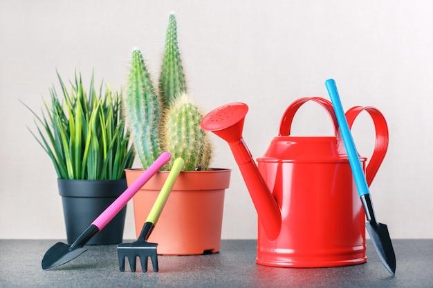 Cura delle piante d'appartamento. passatempo. cactus, pianta succulenta e strumenti nella tabella.
