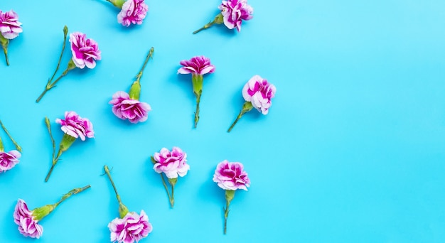 Fiore di garofano su sfondo blu.