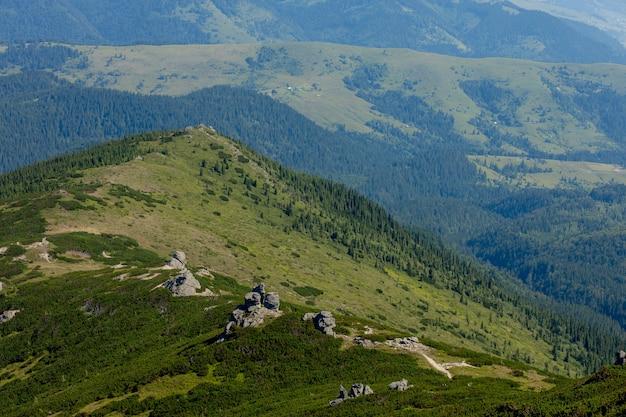 Catena montuosa dei carpazi al mattino d'estate. bellezza della natura ucraina vergine selvaggia. tranquillità.
