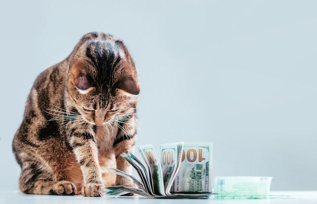 Gatto su un pacco di soldi. concetto di donazione di animali