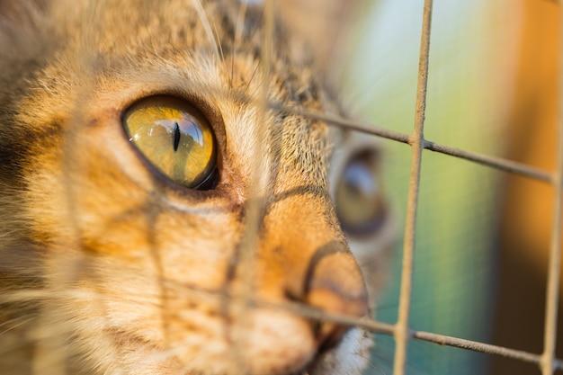 Gatto in gabbia