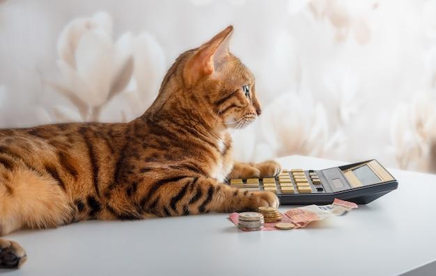 Il gatto calcola i soldi rimasti dopo i pagamenti sulla calcolatrice