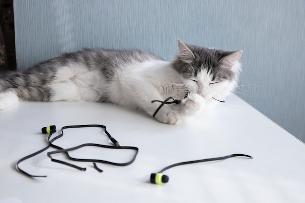 Il gatto mastica le cuffie e sta masticando i fili. come fermare le cattive abitudini degli animali domestici.