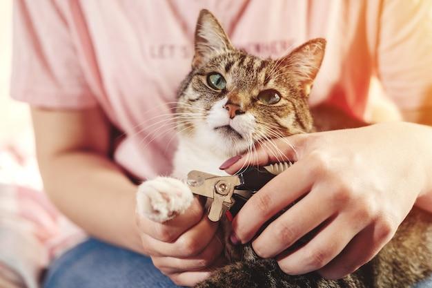 Primo piano di cura di artiglio di gatto