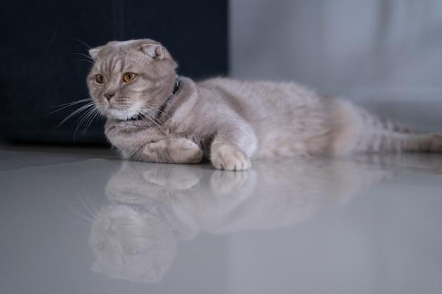 Gatto piccolo gatto sveglio che dorme sul divano nel mio sogno perfetto gatto di casa