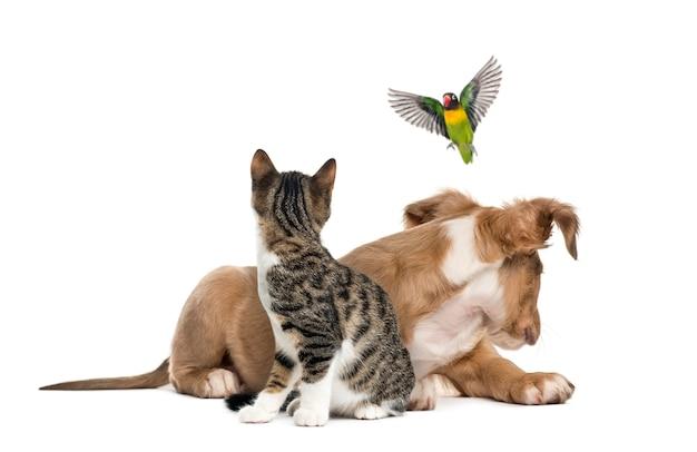 Gatto, cane e uccello, isolato su bianco