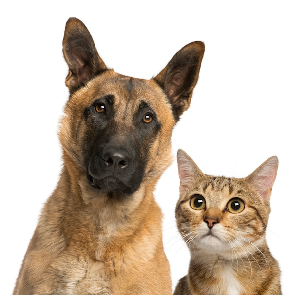 Gatto e cane isolati su bianco