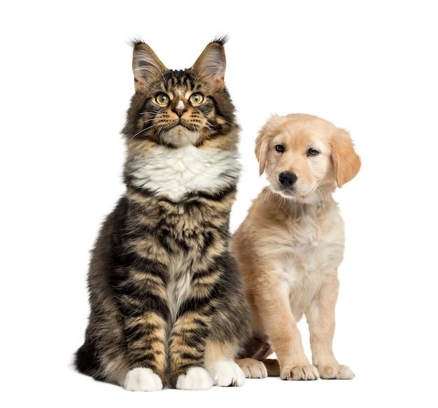 Cucciolo di cane e gatto seduto, isolato su bianco