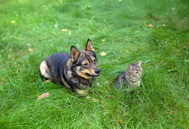 Gatto e cane seduti insieme sull'erba