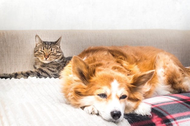Il gatto e il cane dormono insieme sul letto