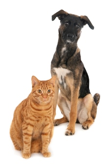 Gatto e cane insieme su bianco