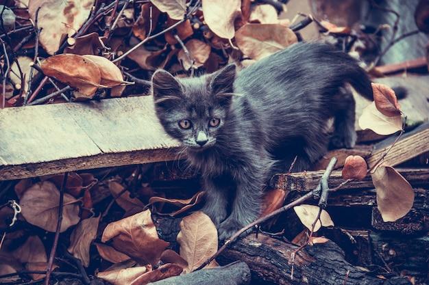 Gatto sul mucchio di immondizia