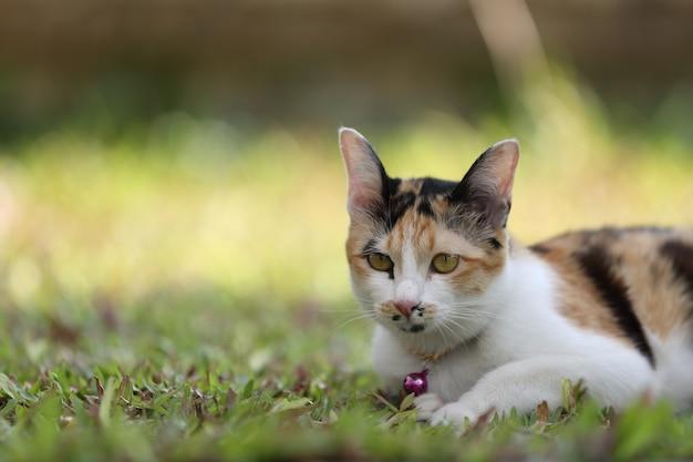 Gatto sullo sfondo di vetro