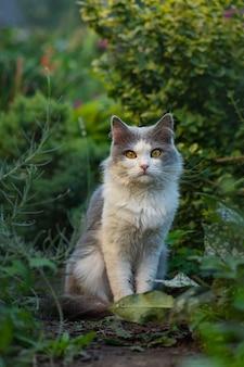 Gatto nell'erba verde