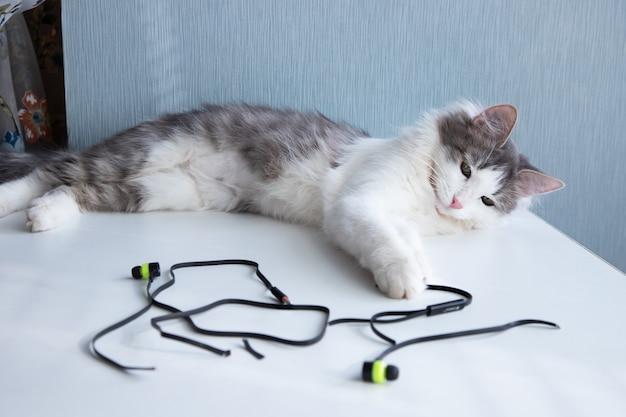 Il gatto ha masticato le cuffie e sta masticando i fili