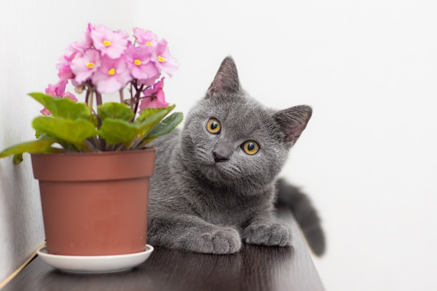 Gatto e fiore domestico in un vaso