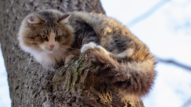 Gatto senzatetto, colorazione grigia e bianca con i capelli lunghi seduto su un ramo di un vecchio albero