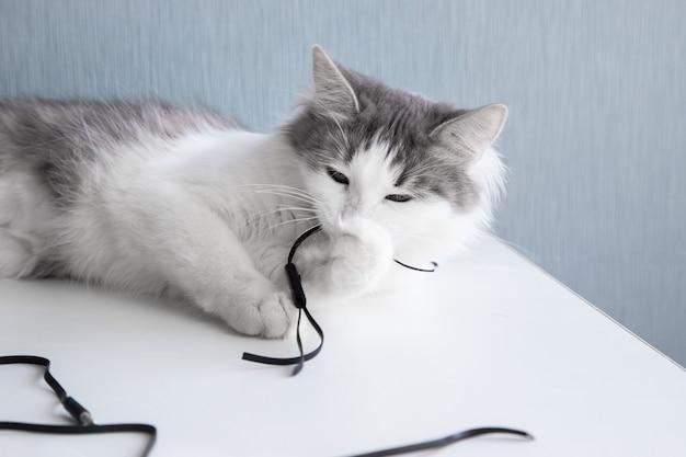 Il gatto sta masticando le cuffie e sta masticando i fili