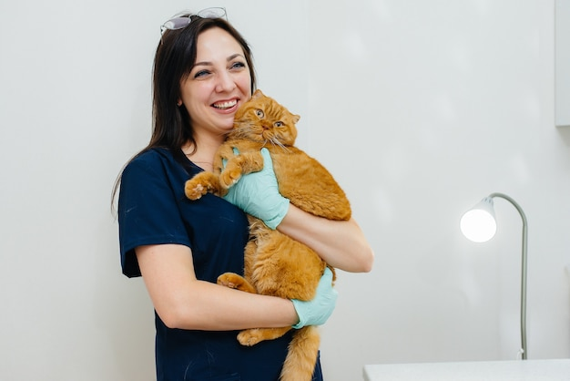 Gatto viene esaminato e trattato in una clinica veterinaria