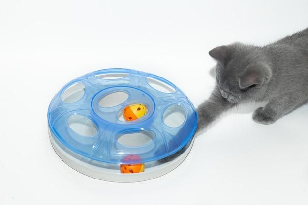 Il gatto sta giocando con un giocattolo. occupazione di animali domestici.