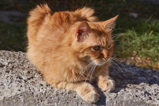 Il gatto riposa sotto i raggi del sole autunnale