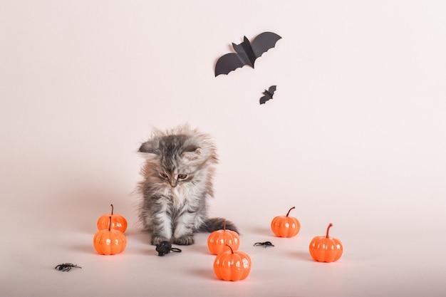 Il gatto è seduto sullo sfondo delle zucche. felice halloween