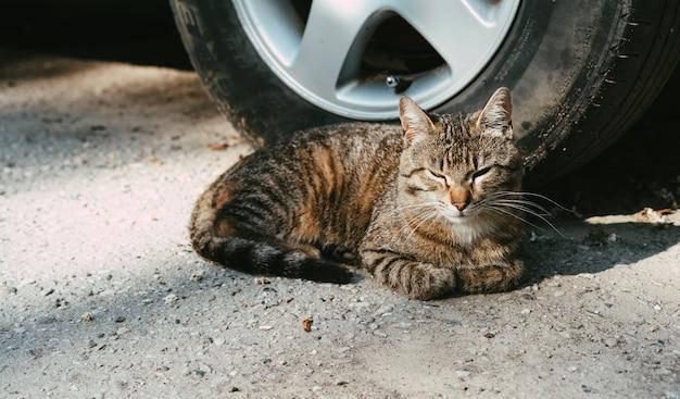 Il gatto è al sole